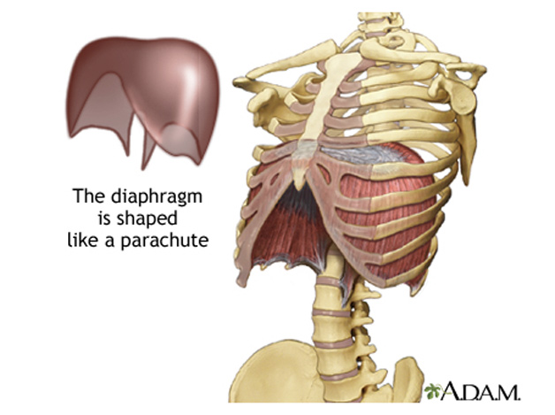 the diaphragm is shaped like a parachute