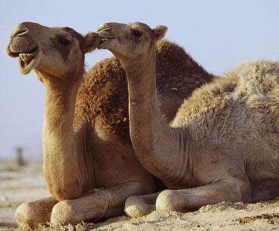 animal yoga poses - camel pose ustrasana