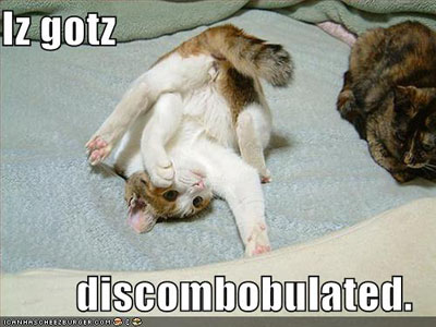 lol cat discombobulated