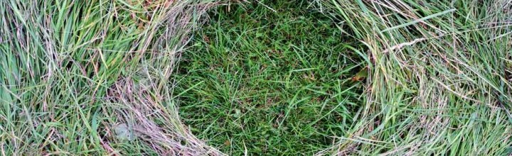 wholeness nature grass circle