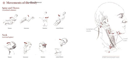 yoga anatomy trail guide book
