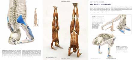 yoga inversions anatomy book