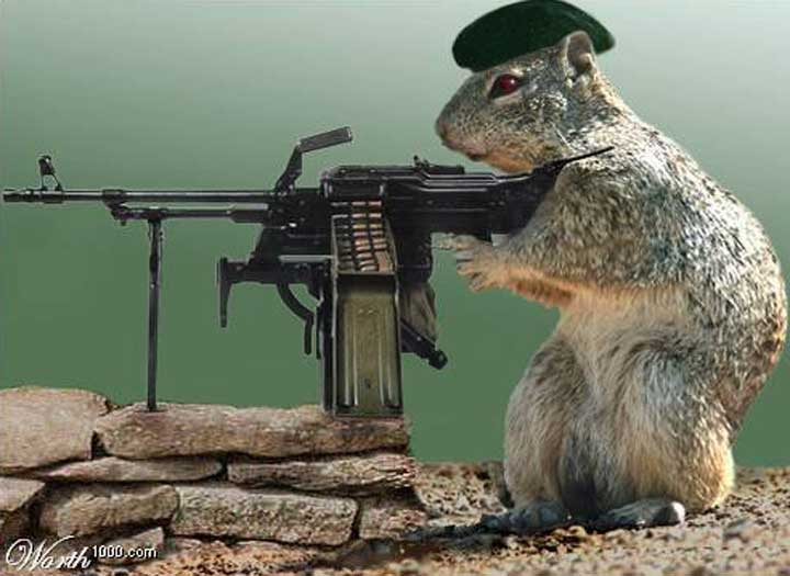 squirrel with machine gun