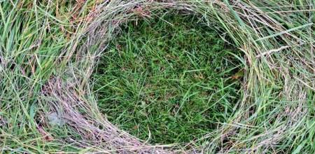 wholeness nature grass circle